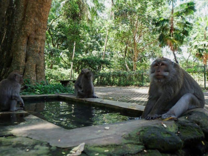 Sacred Monkey Forest Sanctuary Ubud (2)