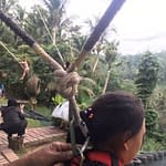 safety real bali swing ubud best swing in bali (7)